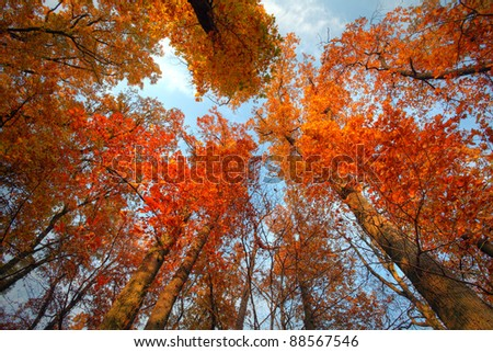 Sky with clouds and sunshine through the autumn tree branches (from below) - stock photo