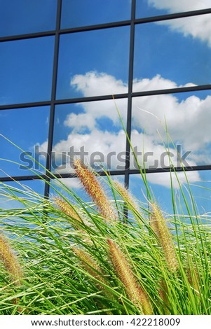 Sky with clouds reflects in a modern window with some decorative grass in front