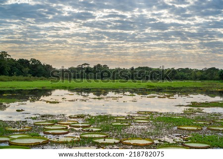 Skyline and river with Victoria Regias in Brazilian Panantal wetlands - stock photo