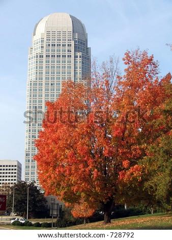 Skyscraper in the Fall - stock photo
