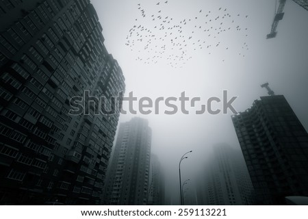 Skyscrapers at early foggy morning in the city district. Flock of birds flying over.  - stock photo