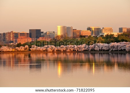 Skyscrapers of Rosslyn, VA with cherry blossom in sunrise - stock photo