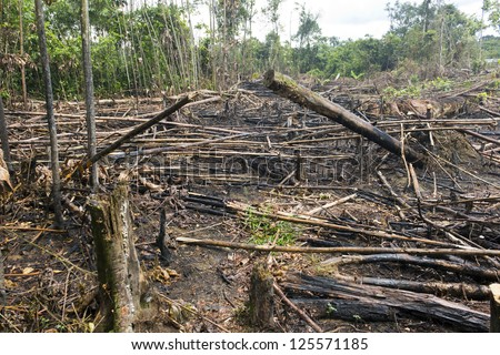 Slash and burn cultivation, rainforest cut and burned to plant crops in the Ecuadorian Amazon - stock photo