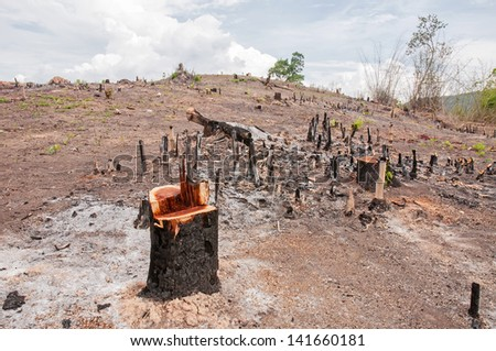 Slash and burn cultivation, rainforest cut and burned to plant crops, Thailand - stock photo