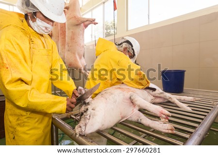 SLAUGHTERHOUSE EMPLOYEE PERFORMING HAIR REMOVAL FROM PORK CARCASS USING A RUBBING KNIFE  - stock photo