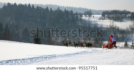 Sled dog. Musher and dogs in Pasterka small village in Table Mountains - Poland - stock photo