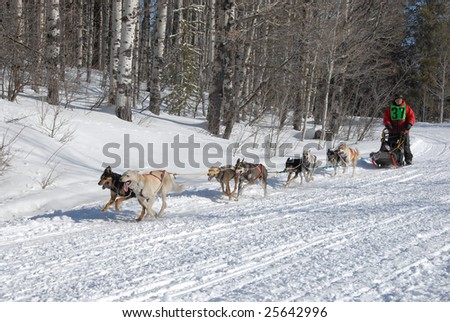 Sled Dog Races - stock photo