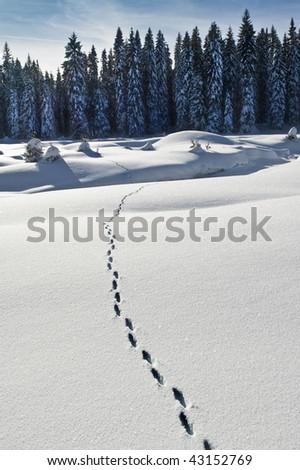 sleeks snow feet - stock photo