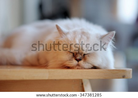 Sleep cat, Bored cat relaxing on table, Furry cat  happy sleep - stock photo