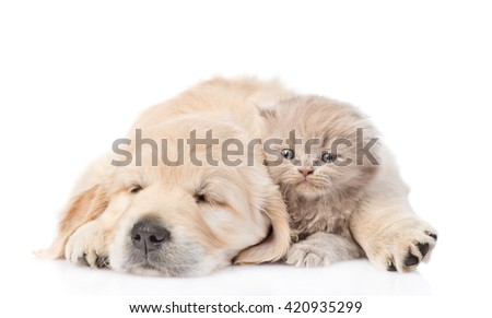 Sleep puppy hugging a cute kitten. isolated on white background - stock photo