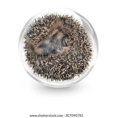 Sleeping baby hedgehog in a glass bulb - stock photo