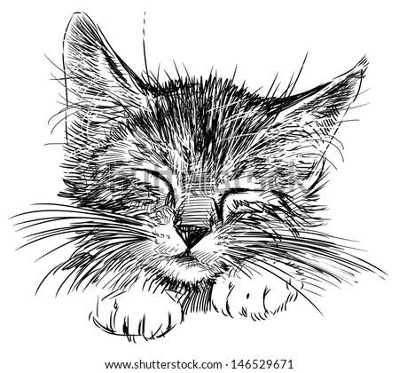 sleeping cat - stock photo