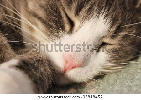 Sleeping cat - stock photo