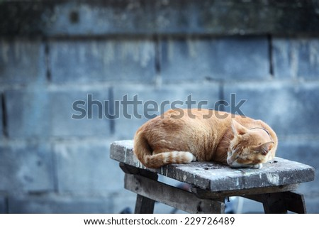 sleeping cat at grunge wall