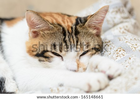 Sleeping cat close up - stock photo