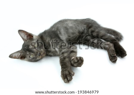 Sleeping cat looking