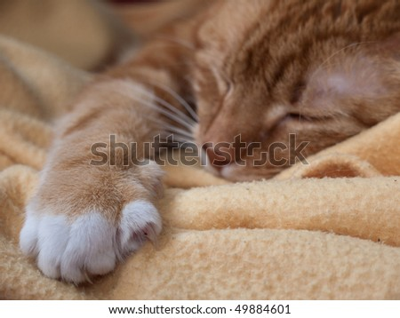 Sleeping cat on blanket - stock photo