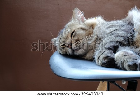Sleeping cat  on chair