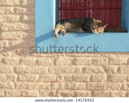 Sleeping cat on colourful windowsill - stock photo