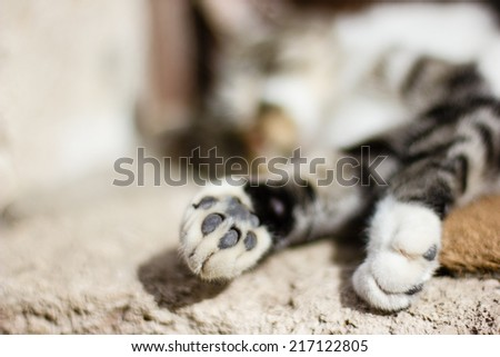Sleeping cat on the street in small village in France - stock photo