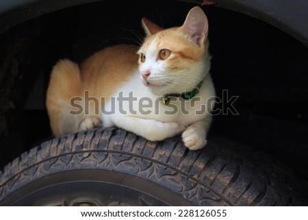 Sleeping cat on wheels - stock photo