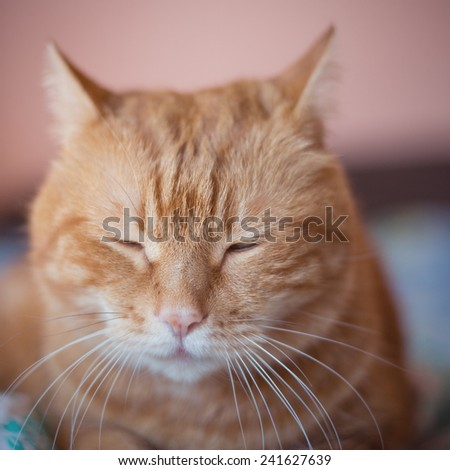 Sleeping cat. Selective focus with shallow depth of field. Color toned. - stock photo