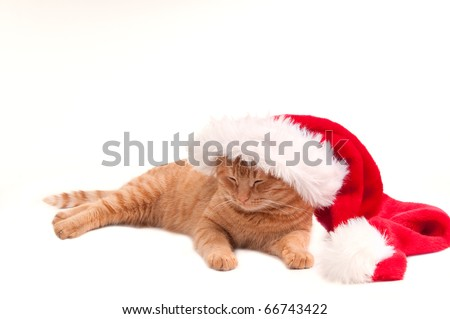 Sleeping cat with a Christmas hat - stock photo