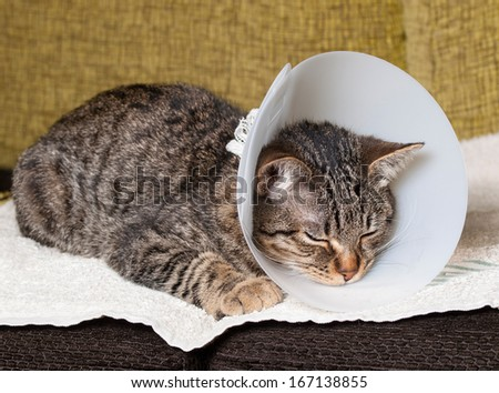 Sleeping cat with an Elizabethan collar inside home - stock photo