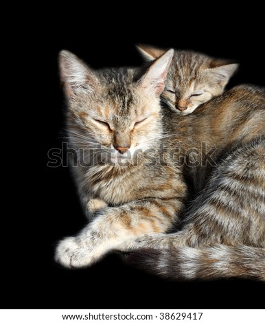 sleeping cats - mother and offspring isolated on black - stock photo