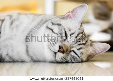 Sleeping cute cat. - stock photo
