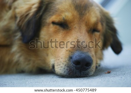 sleeping dog - stock photo