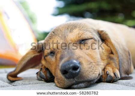 Sleeping dog laying on the floor