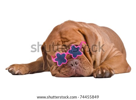 Sleeping dogue de bordeaux puppy with star glasses isolated - stock photo