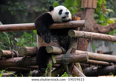 hung chung chih 39 s animals set on shutterstock. Black Bedroom Furniture Sets. Home Design Ideas