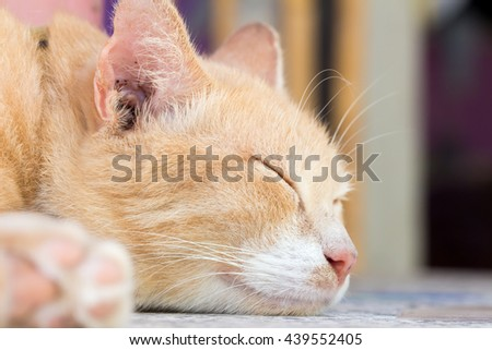 Sleeping ginger cat on a table  - stock photo