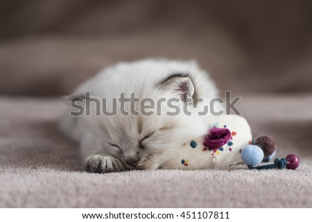 Sleeping Kitten - stock photo