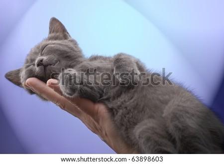 Sleeping kitten on a hand - stock photo