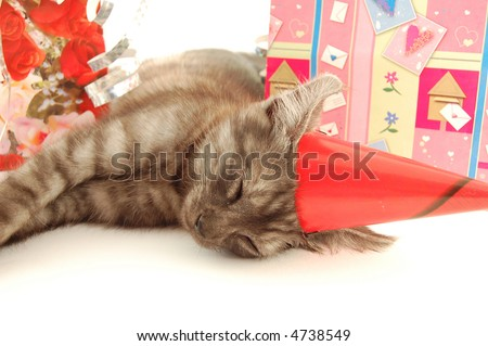 Sleeping little cat after birthday party