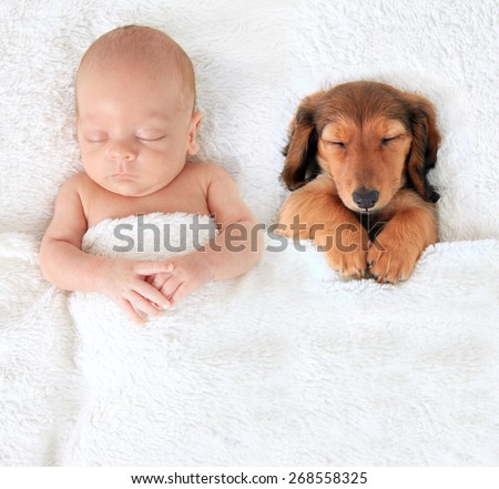 Sleeping newborn baby alongside a dachshund puppy. - stock photo