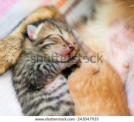 Sleeping newborn kitten