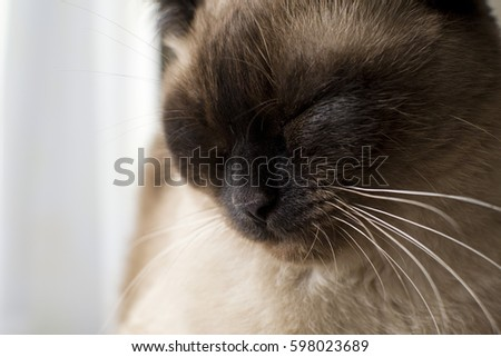 Hairdresser does hair extensions young girl stock photo 665384131 sleeping on the armchair by the window a siamese cat pmusecretfo Image collections