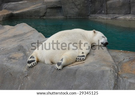 sleeping polar bear - stock photo