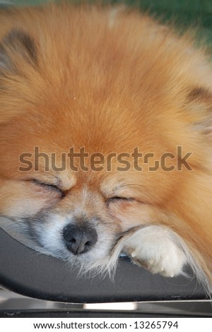sleeping pup - stock photo