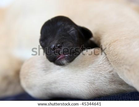 Sleeping puppy between mother's leg on mat - stock photo