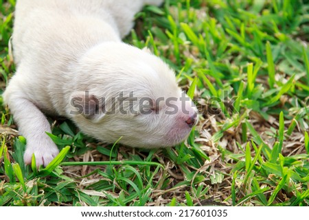sleeping puppy on grass - stock photo