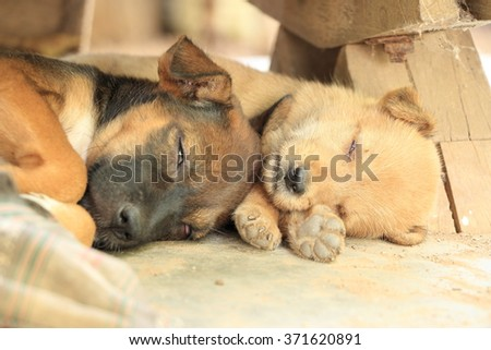 Sleeping puppy on the dirty floor selective focused on the eye of the right one with day light white balance - stock photo