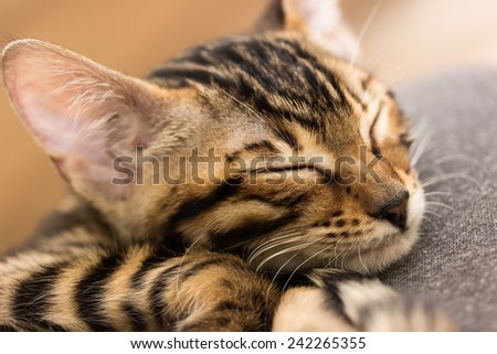 Sleeping red tabby kitten, close-up. Shallow depth of field. - stock photo