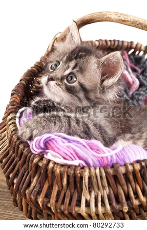 sleeping resting in a basket of balls of yarn - stock photo