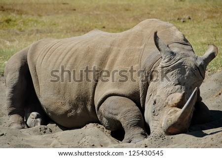 Lewa Wildlife Conservancy | Fight for Rhinos