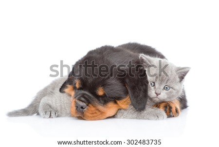 Sleeping rottweiler puppy embracing cute kitten. Isolated on white background - stock photo